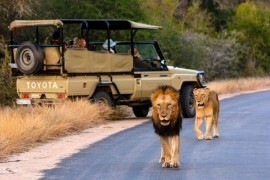 Majestic South Africa - Honeymoon Special